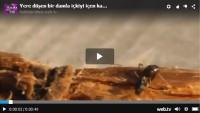 Bir Damla İçkiyi İçen Karıncaya Bakın Ne Oluyor