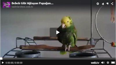 Bebek Gibi Ağlayan Papağan