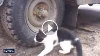Kediden kaçan fare öyle bir yere saklandı ki…